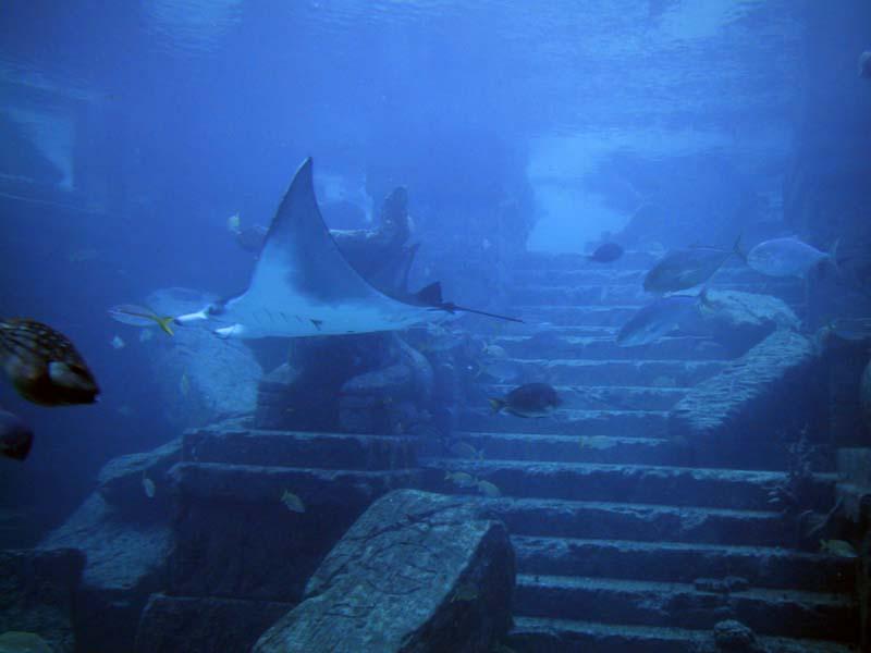 Real Underwater Ruins Ancient Atlantis Ruins